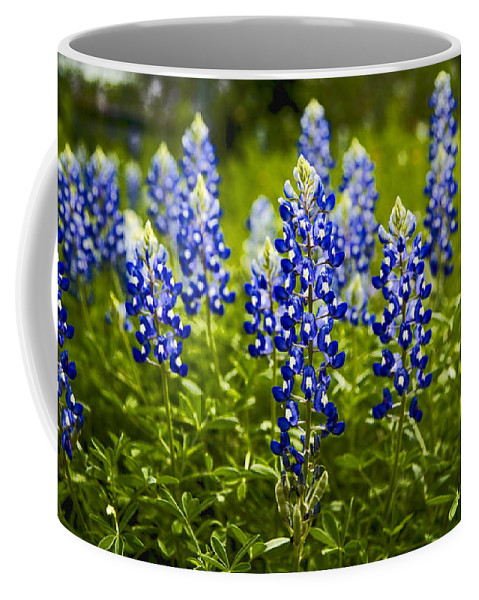 Texas Coffee Mug featuring the photograph Texas Bluebonnets by Stephen Stookey