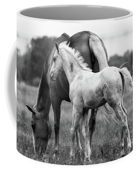 Horses Coffee Mug featuring the photograph Texas Ranch by Vincent Bonafede