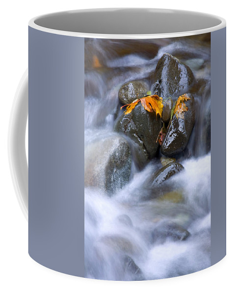 Maple Coffee Mug featuring the photograph Textures Of Autumn by Mike Dawson