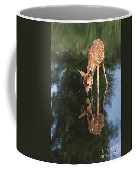 Deer Coffee Mug featuring the photograph That Must Be Me by Sandra Bronstein