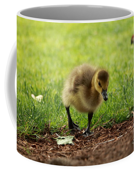 Animal Coffee Mug featuring the photograph The Adventurous One by Elizabeth Dow