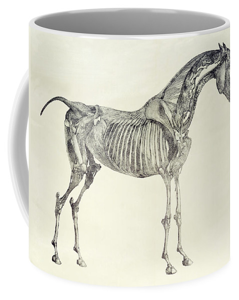 The Anatomy Of The Horse Coffee Mug For Sale By George Stubbs