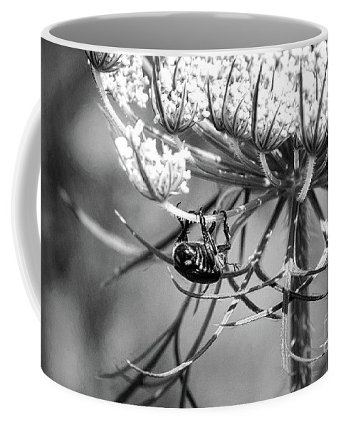 Flower Coffee Mug featuring the photograph The Beetle Acrobat Black And White by Sharon McConnell