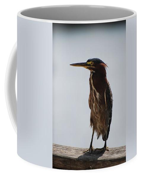Birds Coffee Mug featuring the photograph The Bird by Rob Hans