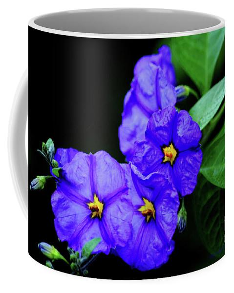 Blue Flowers Coffee Mug featuring the photograph The Blues by Afroditi Katsikis