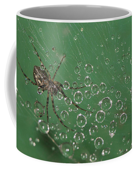 Spider Coffee Mug featuring the photograph The Catcher Of Shperes by Olga Akulinina