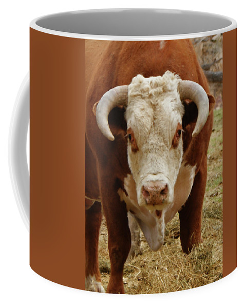 Bulls Coffee Mug featuring the photograph The Challenge by Ernie Echols
