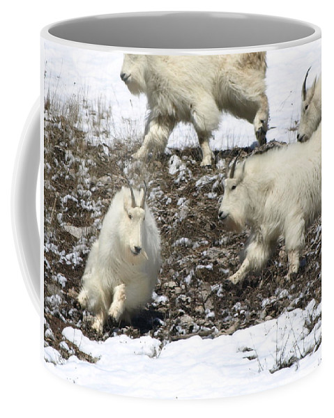 Animals Coffee Mug featuring the photograph The Chase by DeeLon Merritt