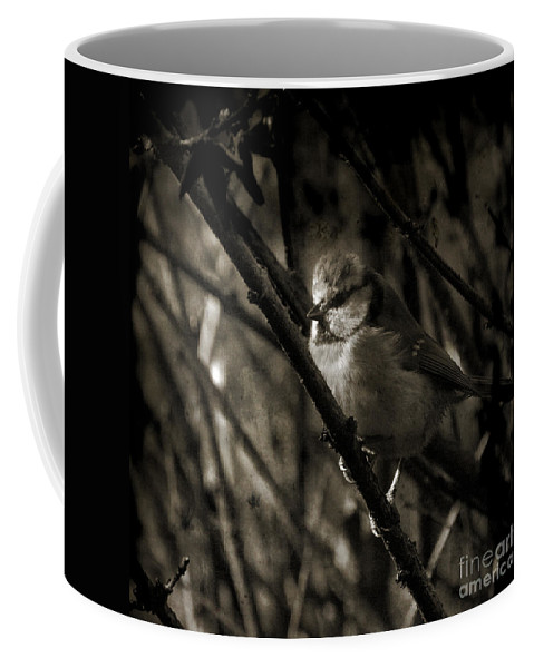 Blue Tit Coffee Mug featuring the photograph The Cold Morning by Angel Ciesniarska