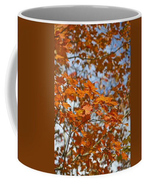 Fall Coffee Mug featuring the photograph The Color Of Fall 1 by Teresa Mucha