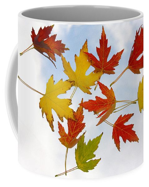 Coffee Mug featuring the photograph The Colors Of Fall by James BO Insogna