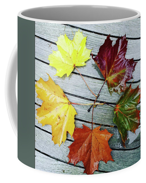 Autumn Coffee Mug featuring the pyrography The Colours Of Autumn by Patricia LaHuis