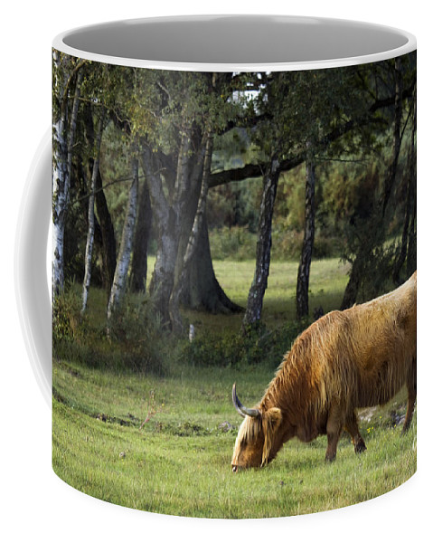 Heilan Coo Coffee Mug featuring the photograph The Creature Of New Forest by Angel Ciesniarska