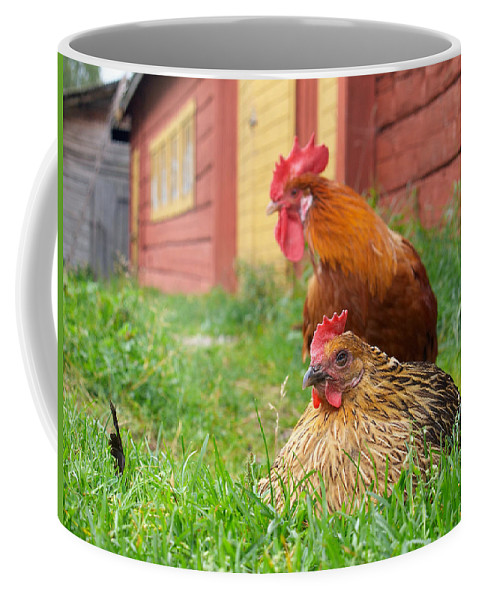 Lehtokukka Coffee Mug featuring the photograph The Curious Cock And The Jealous Hen In The Mystery Of The Black Feather by Jouko Lehto