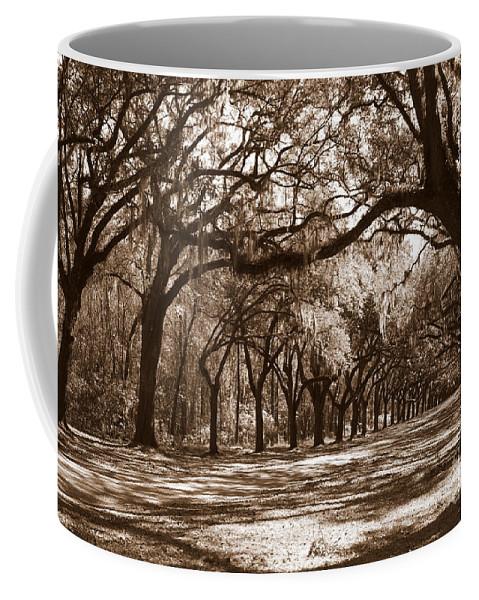 Live Oaks Coffee Mug featuring the photograph The Dance - Sepia by Carol Groenen