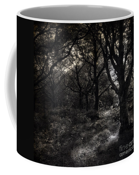 Forest Coffee Mug featuring the photograph The Deep Forest by Angel Tarantella
