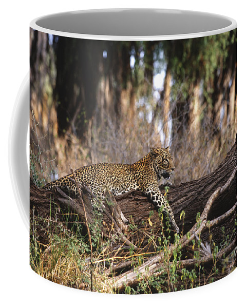 Africa Coffee Mug featuring the photograph The Elusive Leopard by Sandra Bronstein