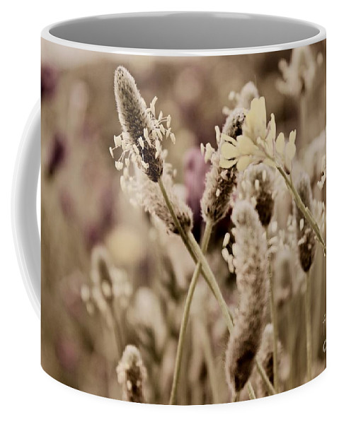 Dandelions Coffee Mug featuring the photograph The End by Clare Bevan