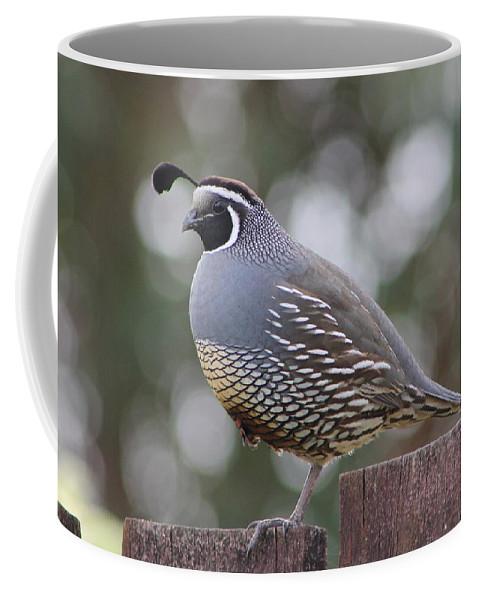 Quail Coffee Mug featuring the photograph Californian Quail by Jill Black