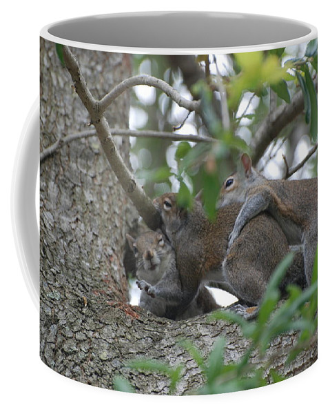 Squirrels Coffee Mug featuring the photograph The Fight For Life by Rob Hans