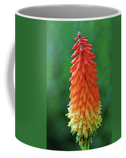 Red Hot Poker Coffee Mug featuring the photograph The Flame by Debbie Oppermann