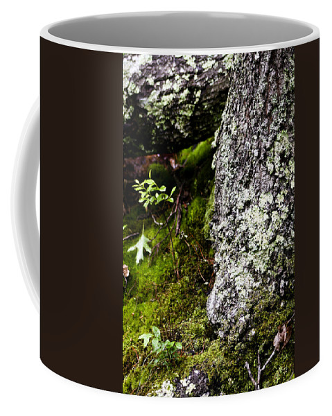Moss Coffee Mug featuring the photograph The Forest Floor Bluestone State Park West Virginia by Teresa Mucha