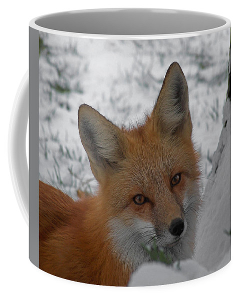 Red Fox Coffee Mug featuring the photograph The Fox 4 by Ernie Echols