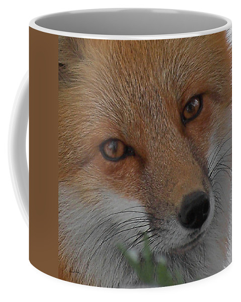 Red Fox Coffee Mug featuring the photograph The Fox 4 Upclose by Ernie Echols