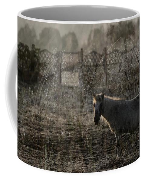 Pferd Coffee Mug featuring the photograph The Frosty Morning by Angel Ciesniarska