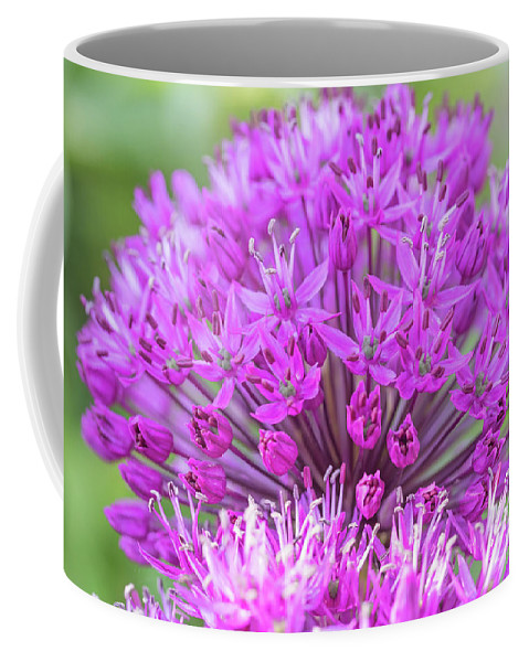 Ornamental Coffee Mug featuring the photograph The Full Bloom Of Flowering Ornamental Onion by Jaroslav Frank