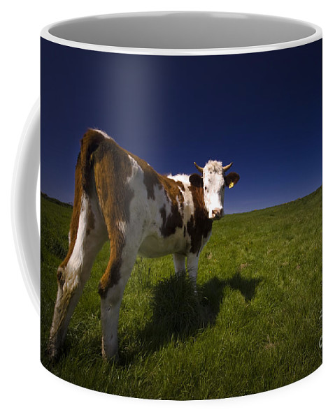 Cow Coffee Mug featuring the photograph The Funny Cow by Angel Ciesniarska