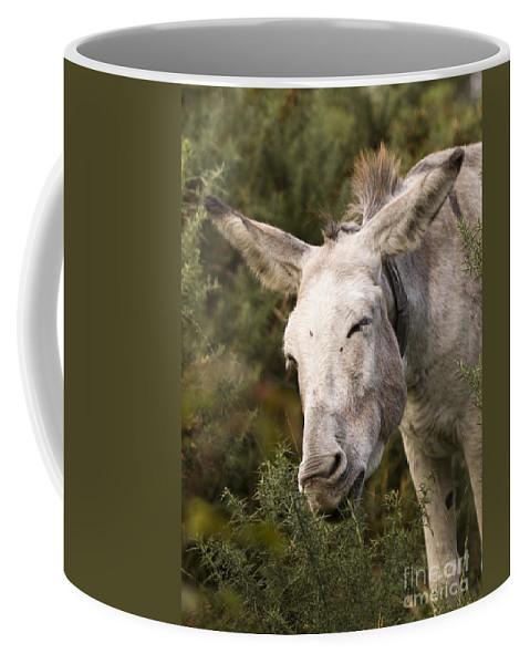 Donkey Coffee Mug featuring the photograph the Funny Donkey by Angel Ciesniarska