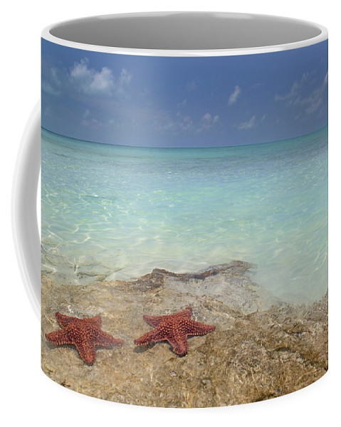 Starfish Coffee Mug featuring the photograph The Gate Keepers by Betsy Knapp