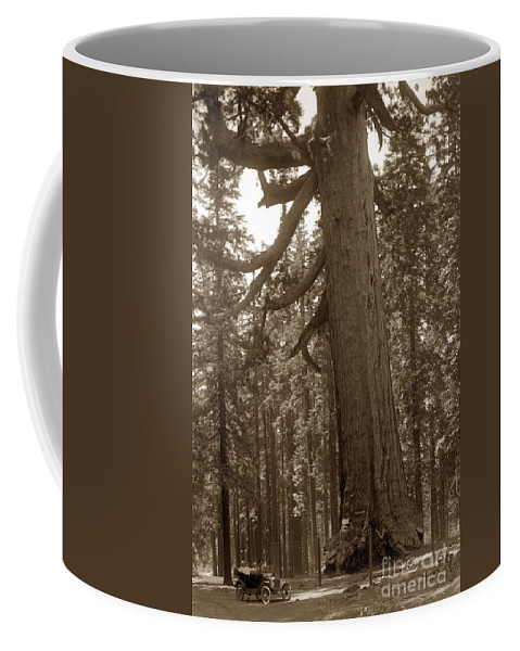 The Grizzly Giant Is A Giant Sequoia In Mariposa Grove Coffee Mug featuring the photograph The Grizzly Giant Is A Giant Sequoia In Mariposa Grove Is In Yosemite Circa 1916 by California Views Archives Mr Pat Hathaway Archives