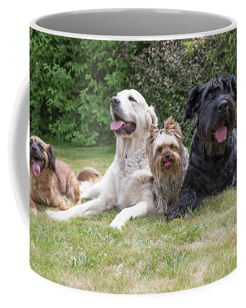 Pet Coffee Mug featuring the photograph The Group Of Dogs by Jaroslav Frank