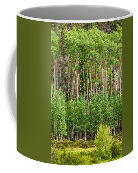 Colorado Coffee Mug featuring the photograph The Grove by Jason Keefe