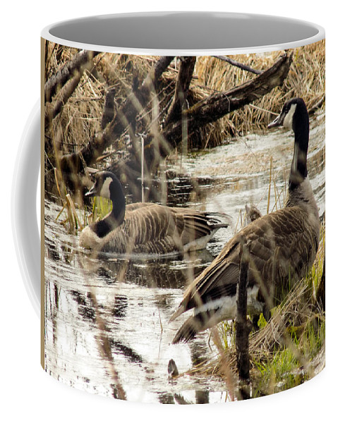 Goose Coffee Mug featuring the photograph The Happy Couple by William Tasker