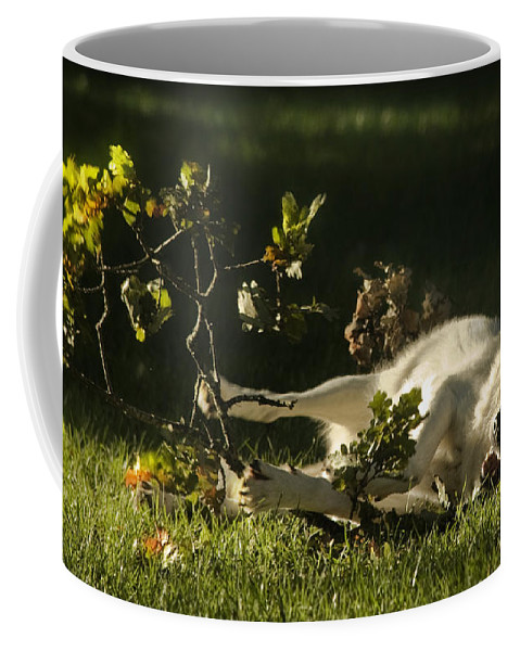 Wolf Coffee Mug featuring the photograph The Happy Wolf by Angel Ciesniarska