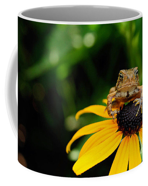 Toad Coffee Mug featuring the photograph The Harbinger by Lois Bryan