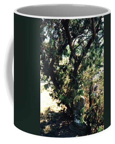 Hidden Grave Stone Mesquite Coffee Mug featuring the photograph The Hidden Grave by Cindy New