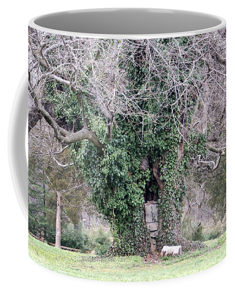 Tree Coffee Mug featuring the photograph The Hobbit House by Jean Haynes