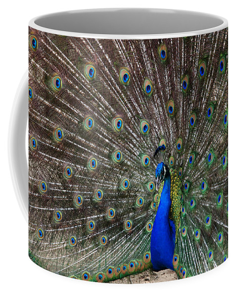 Peacock Coffee Mug featuring the photograph The King by Susanne Van Hulst