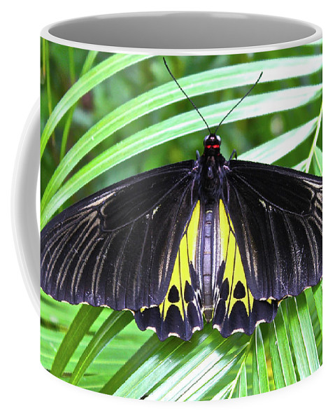 Animal Coffee Mug featuring the photograph The Largest Butterfly In The World by Evgenii Dergachev
