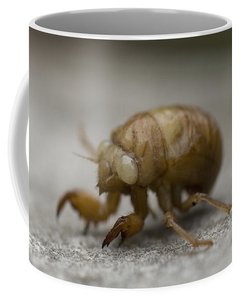 Photography Coffee Mug featuring the photograph The Larval Stage Of A Locust by Joel Sartore