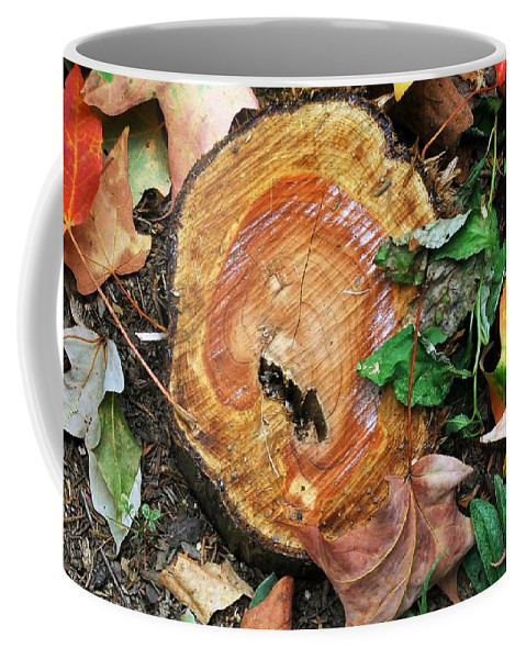 Autumn Coffee Mug featuring the photograph The Last Of The Old Yew by RC DeWinter