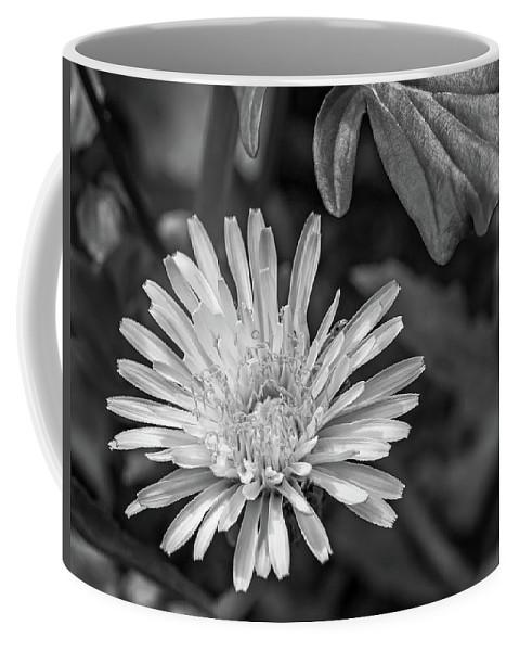 Flora Coffee Mug featuring the photograph The Lawn King Bw by Steve Harrington