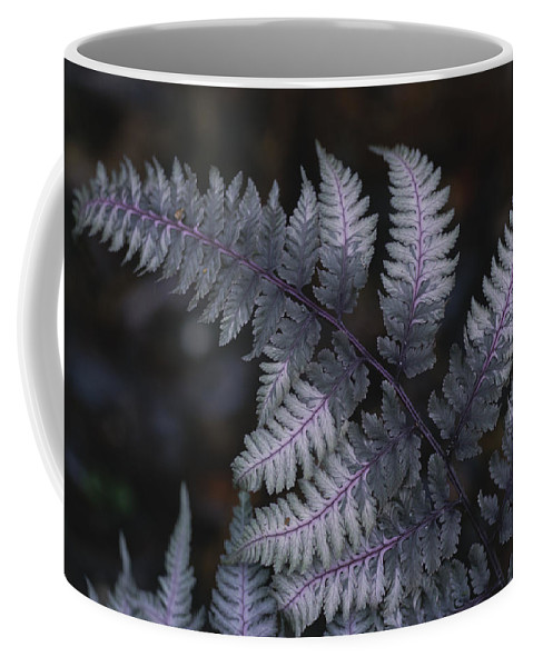 Plants Coffee Mug featuring the photograph The Leaf Of A Japanese Painted Fern by Stephen Alvarez