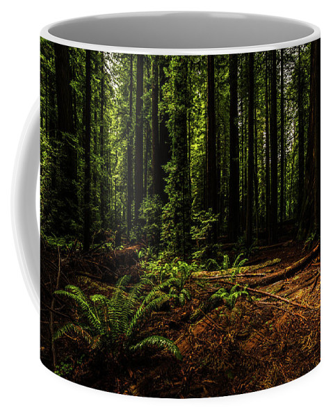 Redwood Coffee Mug featuring the photograph The Light In The Forest No. 2 by TL Mair