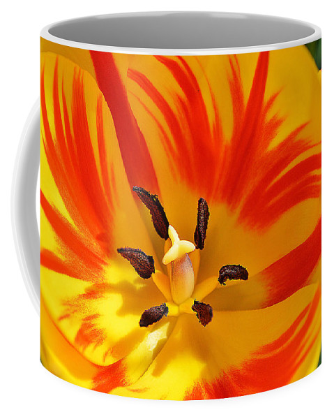 Tulip Coffee Mug featuring the photograph The Light Inside by Felicia Tica