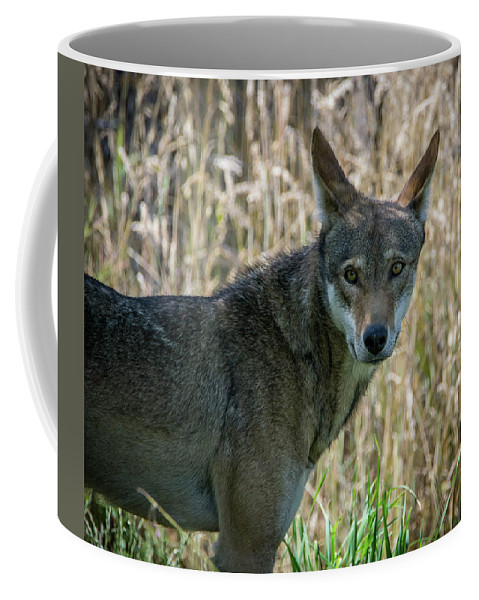 Wolf Coffee Mug featuring the photograph The Look by James Farrell